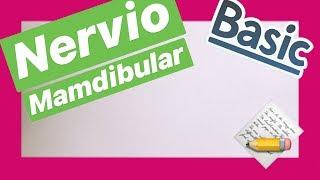 Nervio Mandibular✅ , 3er Video Nervio Trigemino 5 to PAR  2019