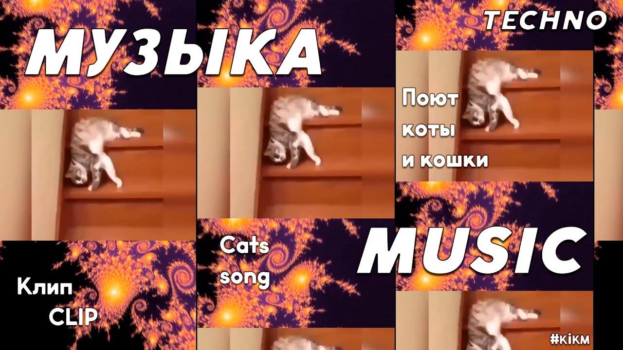 Кот и кошка musiс. Cats misic song. 001 - YouTube