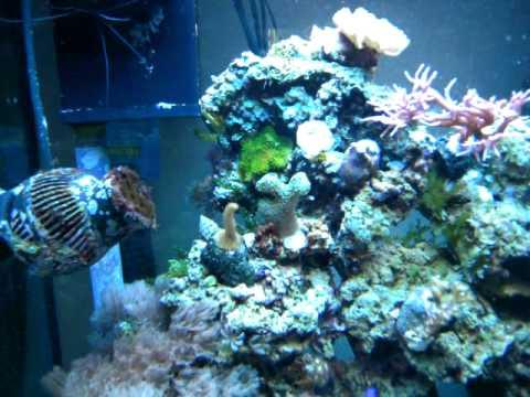 aquarium r 233 cifal eau de mer juwel lido 120l 9 mois