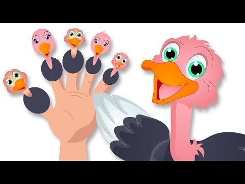 Avestruz dedo de la familia |  Poemas infantiles para niños y canciones