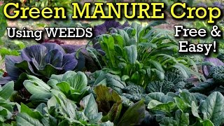 How to Grow a Green Manure Crop From Weeds to Enrich Your Organic Garden Bed