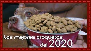 Perrosidades: Las mejores croquetas para perro del 2020 según PROFECO