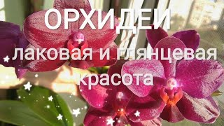 Цветущие орхидеи Sogo Grape and Sogo Relex. Fragrance orchids. Сравнение