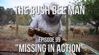 """Transferring a Split from a Nuc Box to a Full Size Hive - Episode 99: """"Missing in Action"""""""