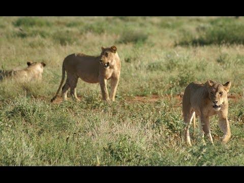 Safari Kenia Tsavo East