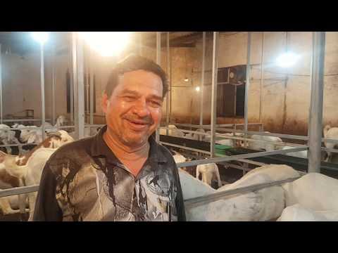Marathi Samvad Barkat Goat Farm.