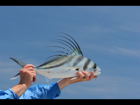 Outdoor Life Network Sea of Cortez ATV Fly Fishing for Roosterfish