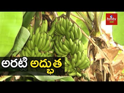 Banana Cultivation In Natural Farming In Pune | hmtv Agri