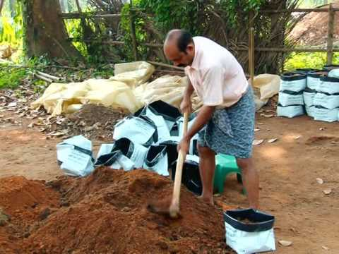 Vegetable Cultivation in Kerala