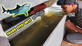 Shark Fish Miss ஆகிருச்சு! 🦈