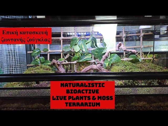 Στέγαση φιδιού κατασκευή terrarium naturalistic bioactive με ζωντανά φυτά