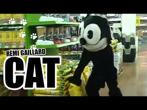 CAT (REMI GAILLARD)