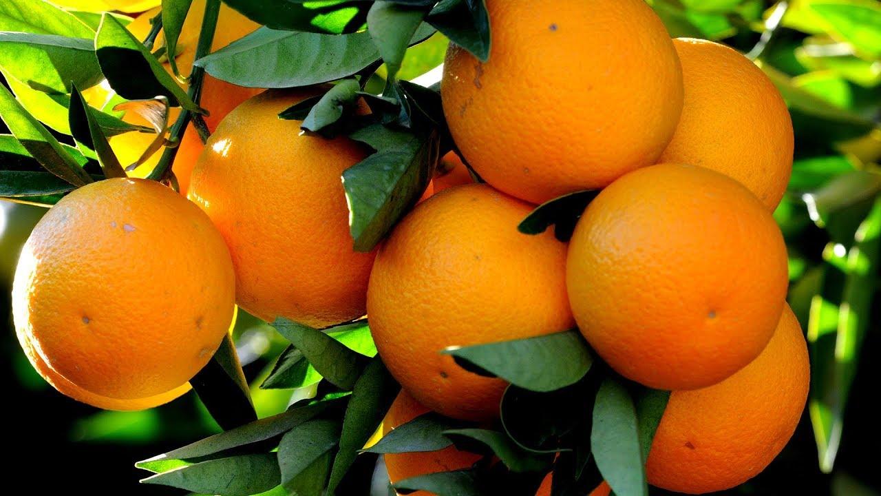 Portakal Reçeli Tarifi Videosu