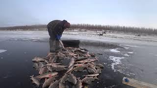 Перволёдка 2019 Yakutia Якутия