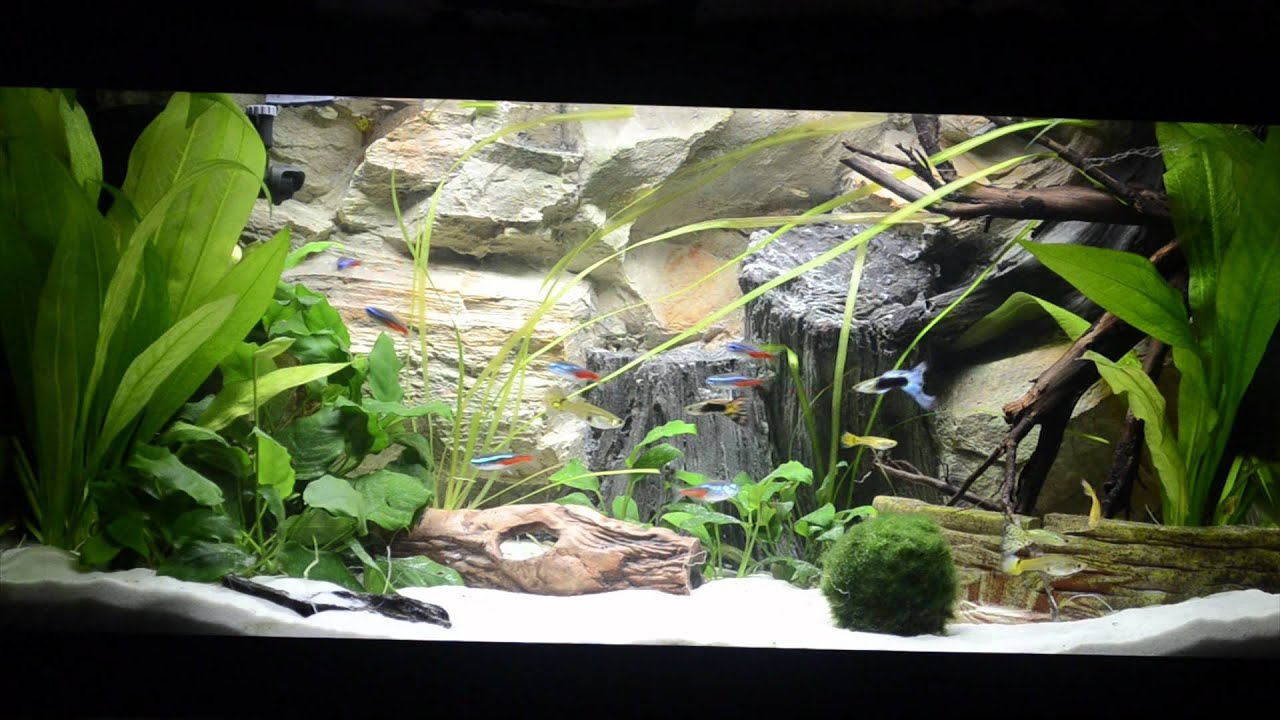 aquarium s sswasser 54l becken youtube. Black Bedroom Furniture Sets. Home Design Ideas