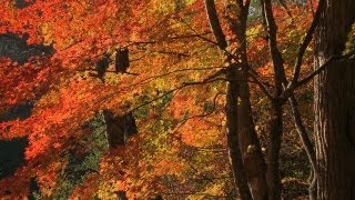 Autumn Music.Piano Music.lyrics music.autumn scenery