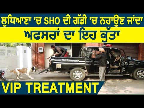 Super Exclusive : VIP Treatment : Ludhiana में SHO की गाड़ी में नहाने जाता है Officers का ये Dog