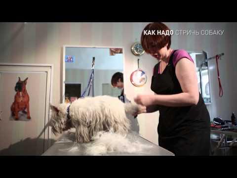 Как можно подстричь собаку
