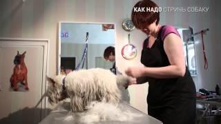как надо стричь собаку
