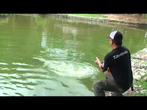 Toman Zoo Negara Malaysia 10 KG