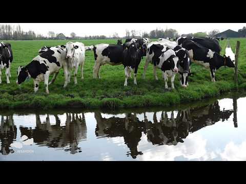 Drie Waarden, Leven in een Zuid - Hollands landschap