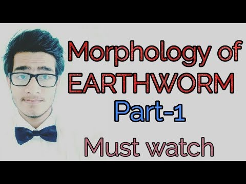 Morphology of Earthworm part-1