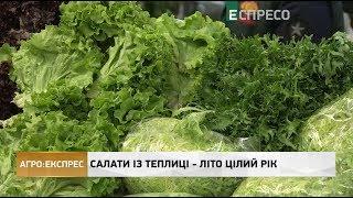 Агро-Експрес   Салати із теплиці - літо цілий рік