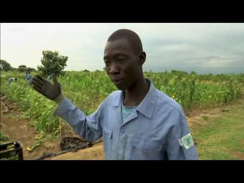 South Korean Peacekeepers Nurture South Sudan's New Farmers