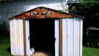 New Chicken Coop Project Part 1