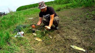 Ловим Белого Амура Карась не отстает Рыбалка в Мае 2020