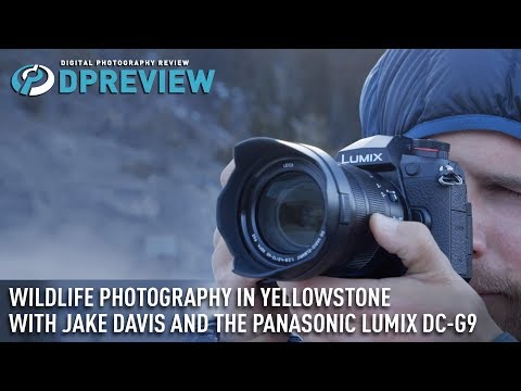 Wildlife photography in Yellowstone with Jake Davis and the Panasonic Lumix DC-G9