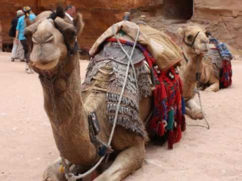 A Camel named Clyde