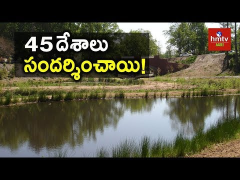 Adarsha Watershed in Kothapally | Water Conservation | hmtv Agri