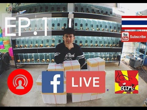 Live facebook by BOOMz Crayfish EP.1