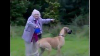 Бабушка кинула собачке игрушку...