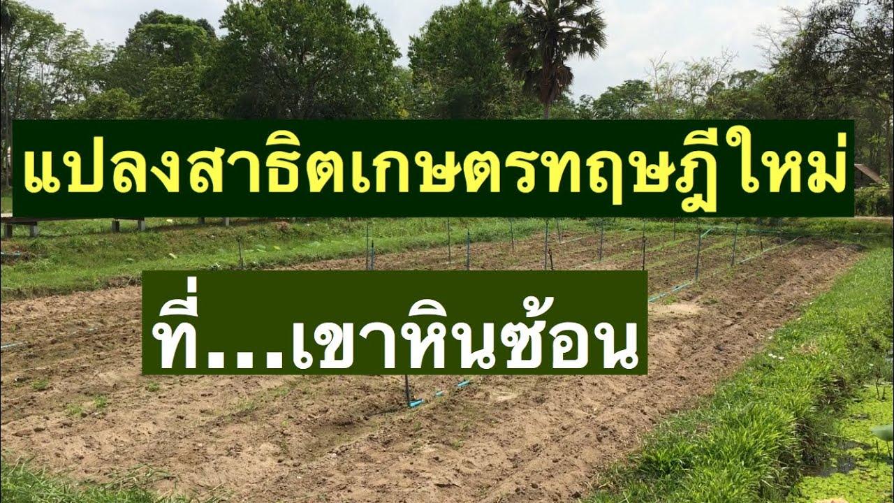 แปลงสาธิตเกษตรทฤษฎีใหม่ ที่ศูนย์ศึกษาการพัฒนา เขาหินซ้อน