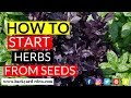How to start herbs from seed | Seed starting herbs for beginners