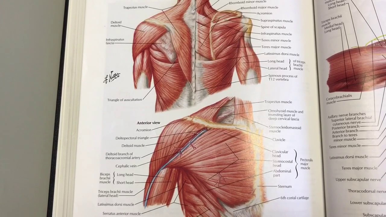 Functional Shoulder Anatomy Part 2: StabilityWOD 49 - YouTube