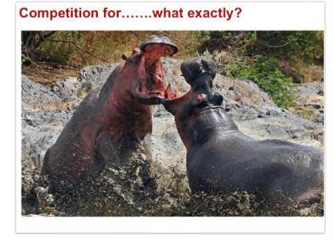 IB Bio - Ecology, Conservation (Option C) Part I