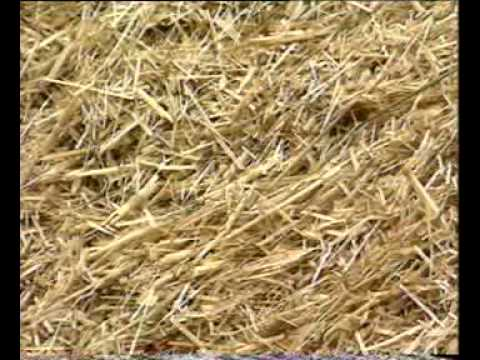 Using urea in straw part-2 Dr.Ashraf Sahibzada