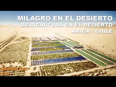 Hortalizas Opiacl Observatorio Para La Innovación Agraria