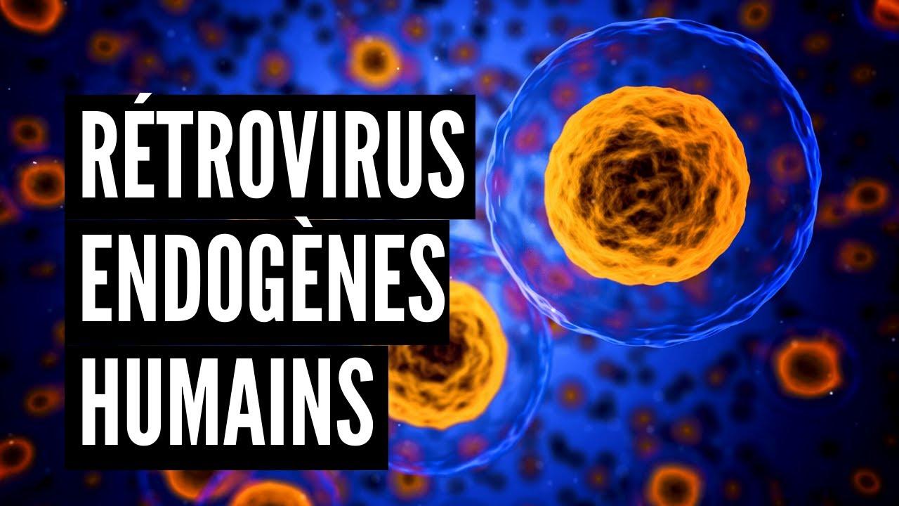 Download Rétrovirus Endogènes Humains (HERV)