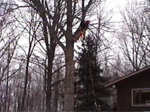 White Oak Tree Removal Using a GRCS