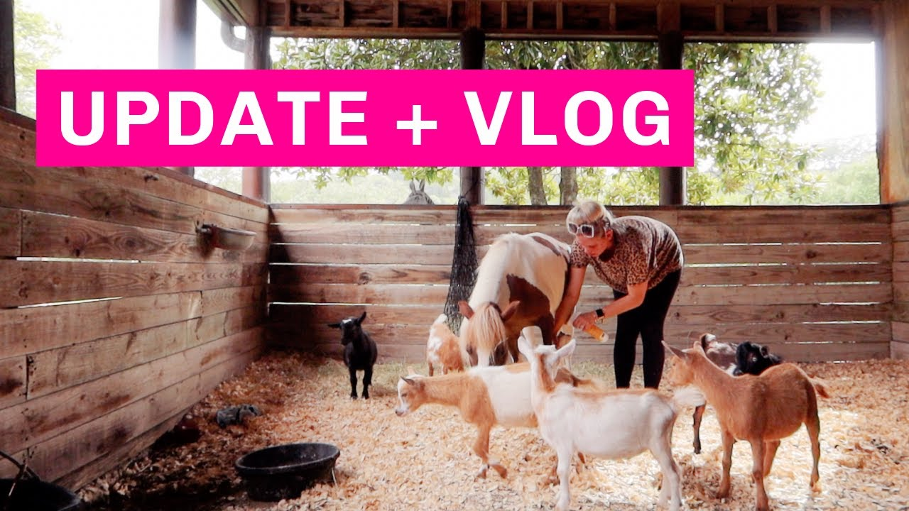 NEW UPDATES ON MY BRAND AND DAY IN THE LIFE AT THE HACIENDA! Aaryn Williams Vlog