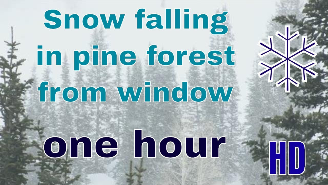 (HD) Snow falling in pine forest from window - YouTube