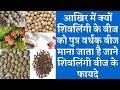 Shivlingi Seeds Benefits and Use शिवलिंगी बीज के हैरान करदेने वाले चमत्कारी फायदे