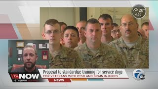 Michigan Senator David Knezek Proposes To Standardize Training For Service Dogs