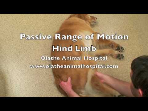delayed passive range of motion in post op physical therapy Intervention plan, prescription, therapy, treatment s with line above without.