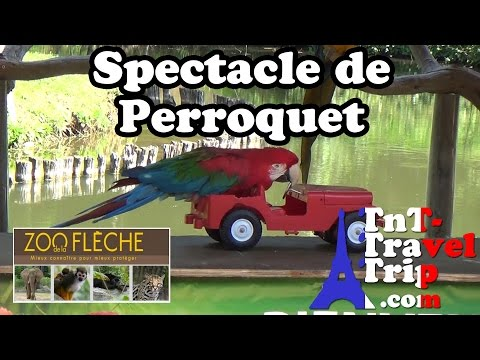 "Zoo de La Flèche – Spectacle de perroquet ""Parrot Jungle"""