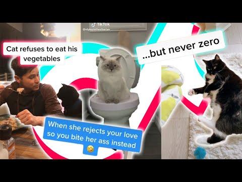😻 FUNNY Cats TikTok Try Not to LAUGH 🤣 2020   Gatos Fabulosos